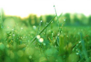 Manfaat Proherbarix — Komposisi Alami dan Tidak Perlu Resep